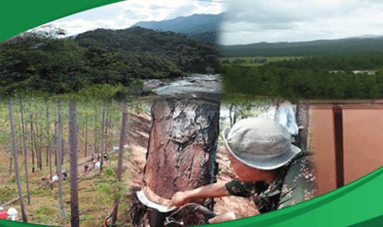 Estudio Aprovechamiento y Comercialización de Productos Provenientes del Bosque