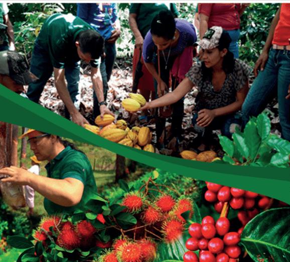 Sistematización Escuelas de Campo Cambios Productivos y Ambientales